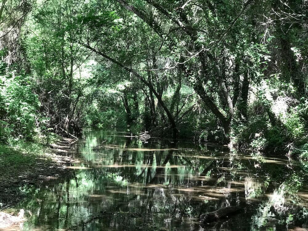 De verkoelende rivier met haar schaduwrijke bomen (Spaanse binnenland).