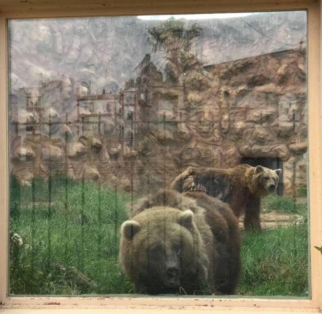 Blij waren we toen we achter de ramen twee beren rond zagen scharrelen.