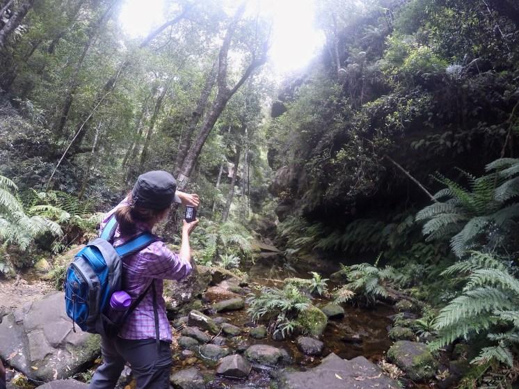 Hiking Rainforests