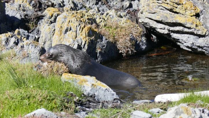 Seals at Red Rocks