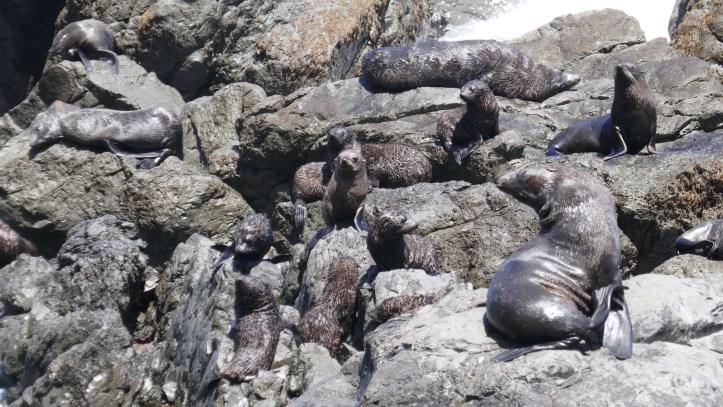 HIDDEN GEMS OF THE NORTH ISLAND Cape Palliser New  Zealand