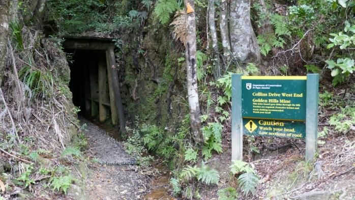 Puketui Valley Walks Top 12 Walks In The North Island