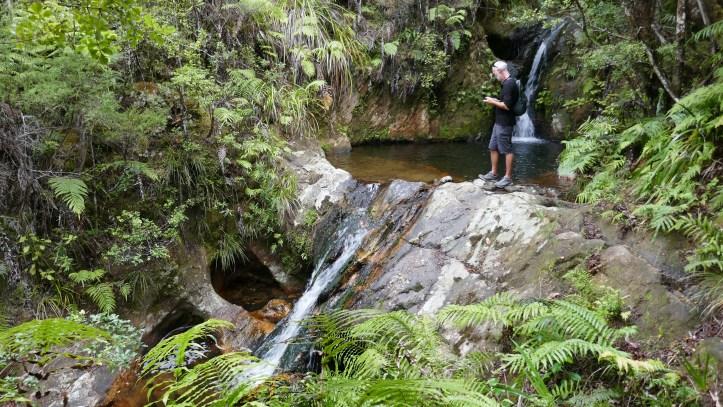 Puketui Valley Top 12 Walks In The North Island