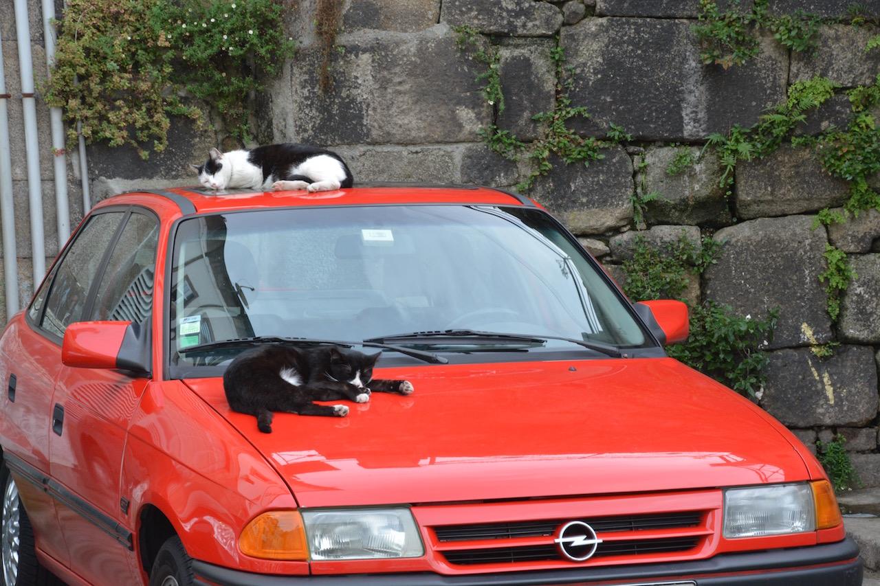 Cat nap in Porto