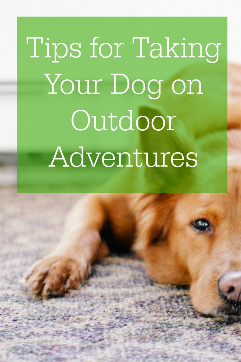 Tips for Taking Your Dog on Outdoor Adventures - Campfire Chic