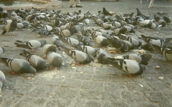 Las palomas producen molestias a los vecinos de Lopera.