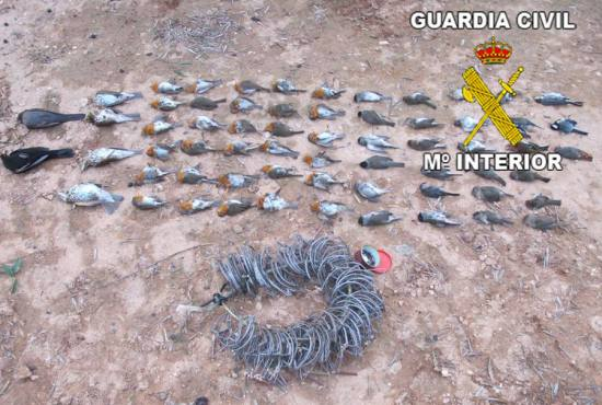Costillas y pájaros incautados al detenido. Foto: Guardia Civil.