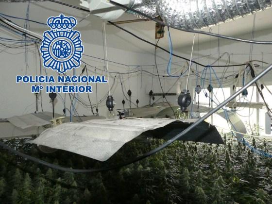 Plantación de marihuana en la Sierra de Andújar
