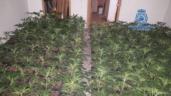 Marihuana en Jaén