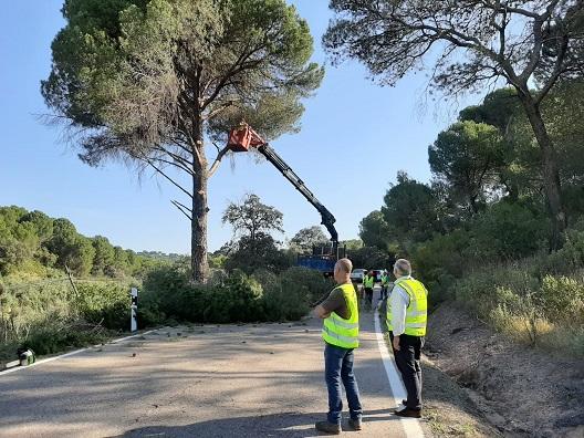 Fomento realiza nuevos trabajos de poda en la carretera A-6177 de Andújar para mejorar la seguridad vial.