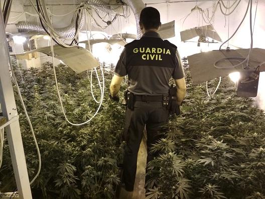 La Guardia Civil se incauta de 243 plantas de marihuana en Mengíbar.