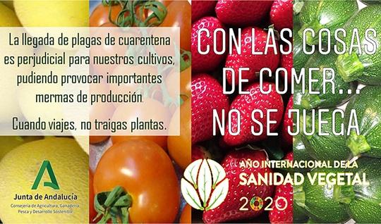 Agricultura inicia la campaña 'Con las cosas de comer no se juega' para evitar plagas importadas.