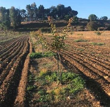 Las solicitudes para las ayudas de Diputación al fomento del sector agrícola y ganadera se incrementan más de un 18%.
