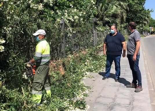 La concejalía de Medio Ambiente de Andújar lleva a cabo un estudio sobre el estado de los árboles en zonas infantiles.