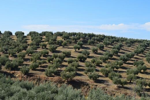 El sector agrario jiennense manifiesta su rechazo al decreto de convergencia aprobado por el Gobierno.