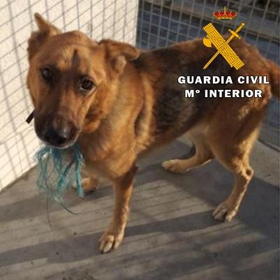 La Guardia Civil investiga a dos personas como presuntas autoras de un Delito Relativo a la Protección de Animales Domésticos.