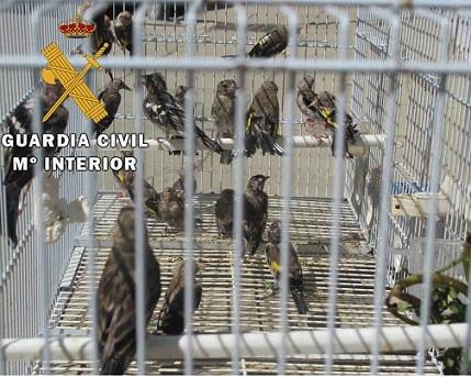 La Guardia Civil investiga a una persona como presunta autora de un Delito contra la Protección de la Flora y Fauna.