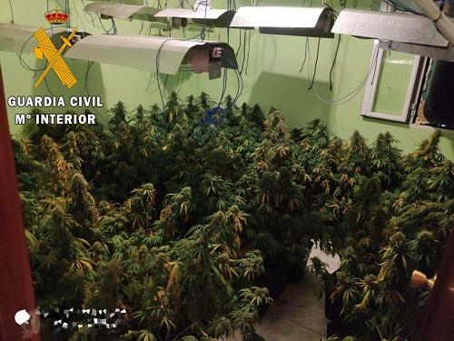 La Guardia Civil detiene a un joven con 207 plantas de marihuana en una vivienda de Los Villares.