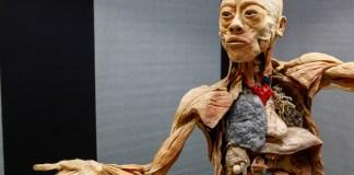 exposição maravilhas do corpo humano