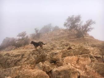 camping-aourir-marcher-avec-xina-dans-les-montagnes-2017-06