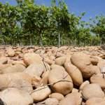 A la découverte des vignobles des Côte du Rhône