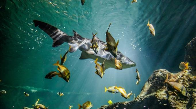 voir requin à l'aquarium la rochelle charente maritime