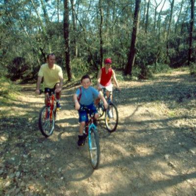 Vélos-dans-la-forêt