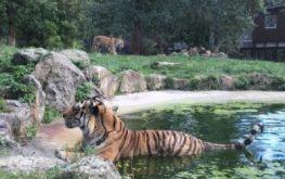 peaugres-safari-parc