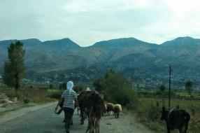 Oftmals Viehherden auf den Hauptstraßen