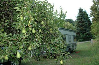 Viele Obstbäume zum Naschen