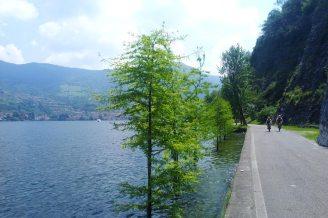 Uferweg, Bäume im Wasser