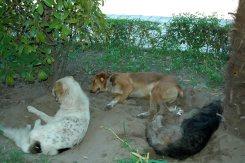 Hundeleben bei 40 Grad