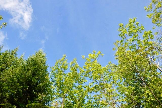 Canopy shot!