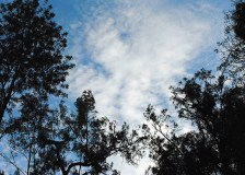 even the sky is better in the bush