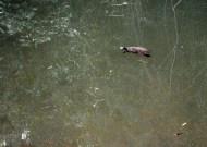 turtles at cedar grove waterhole