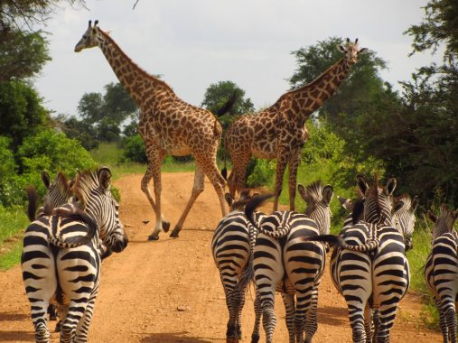 Image of wild animals in Africa