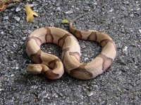 Image of keep copperhead snakes away