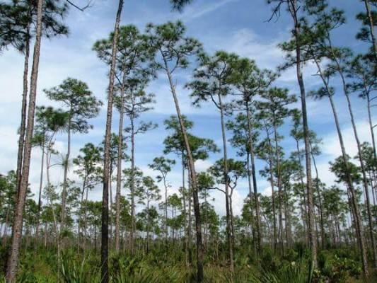 Image of national park everglades