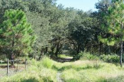 Image of florida free camping
