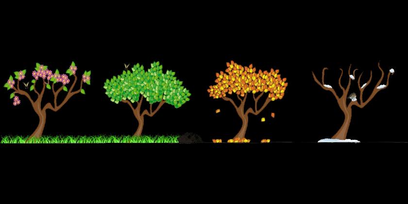 four trees four seasons