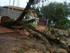 Árvore caída no Bairro Jardim Gramado em São Gabriel do Oeste – Foto: Lurdes Alves/ Prefeitura de São Gabriel do Oeste