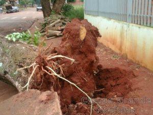 Árvore foi arrancada pela raiz em São Gabriel do Oeste – Foto: Lurdes Alves/ Prefeitura de São Gabriel do Oeste