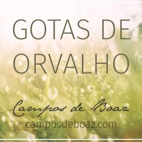 Gotas de orvalho (200) ― Especial