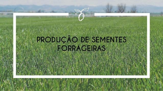 produção de semente puras