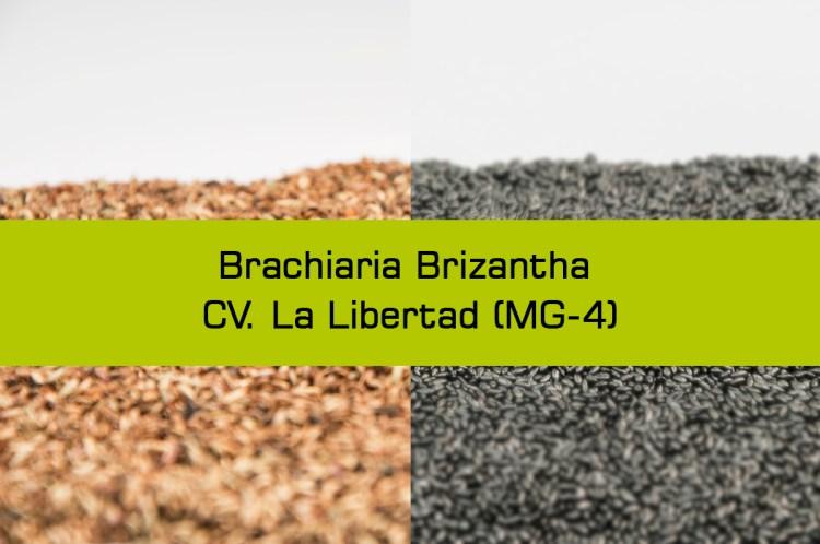 brizanta-1-2