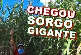 Super Sorgo Gigante Santa Elisa