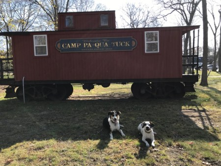2 dogs in front of caboose