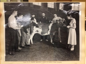 Instructing students in dairy judging (Image courtesy of MSU Archives & Historical Collections)