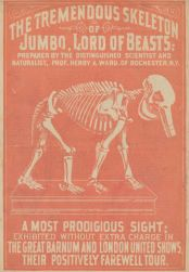 Advertisement to see Jumbo's skeleton at the circus. Image source.