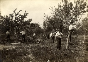 Agriculture class in the campus orchards